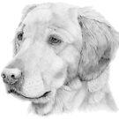 Golden retriever 2 by doggyshop