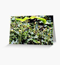 Liverwort Greeting Card
