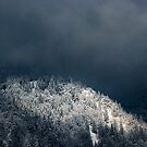 Darkness and sun over snowy spruce forest by Patrik Lovrin