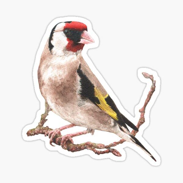 Goldfinch, Feb 2019 Sticker