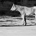 Old Swayback B&W by John  De Bord Photography