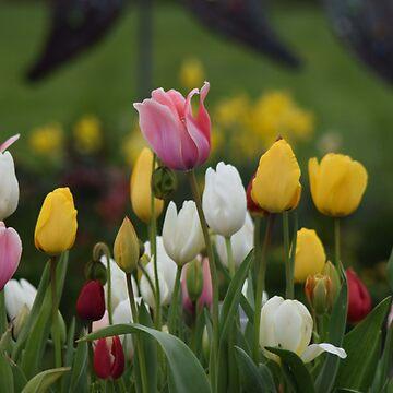 Tulip Garden by LyndaAnneArt
