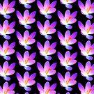 Krokus in violett, Krokusse, Frühjahr, Blumen, lila von rhnaturestyles