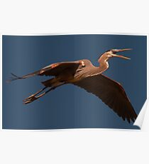 Pterosaur Poster