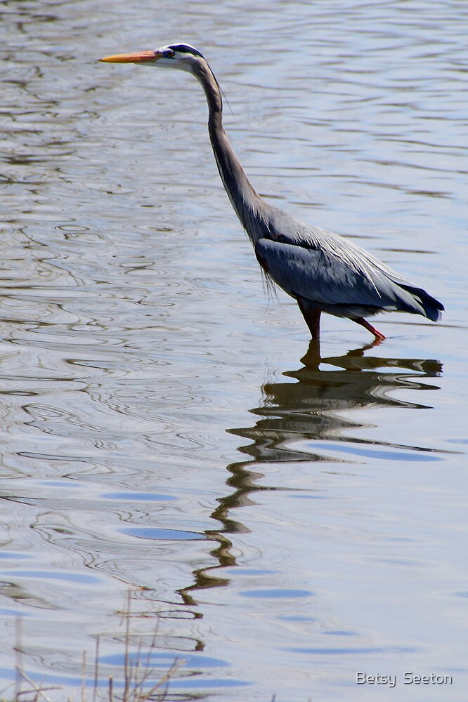 Blue Heron by Betsy  Seeton