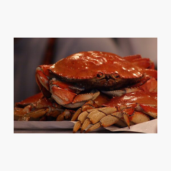 Crabby...all day long Photographic Print