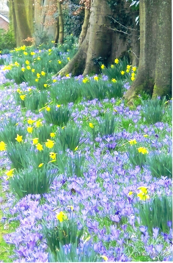 Spring Flower Show. by Carla Maloco