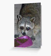 Tarjeta de felicitación Dangerous Looking Raccoon