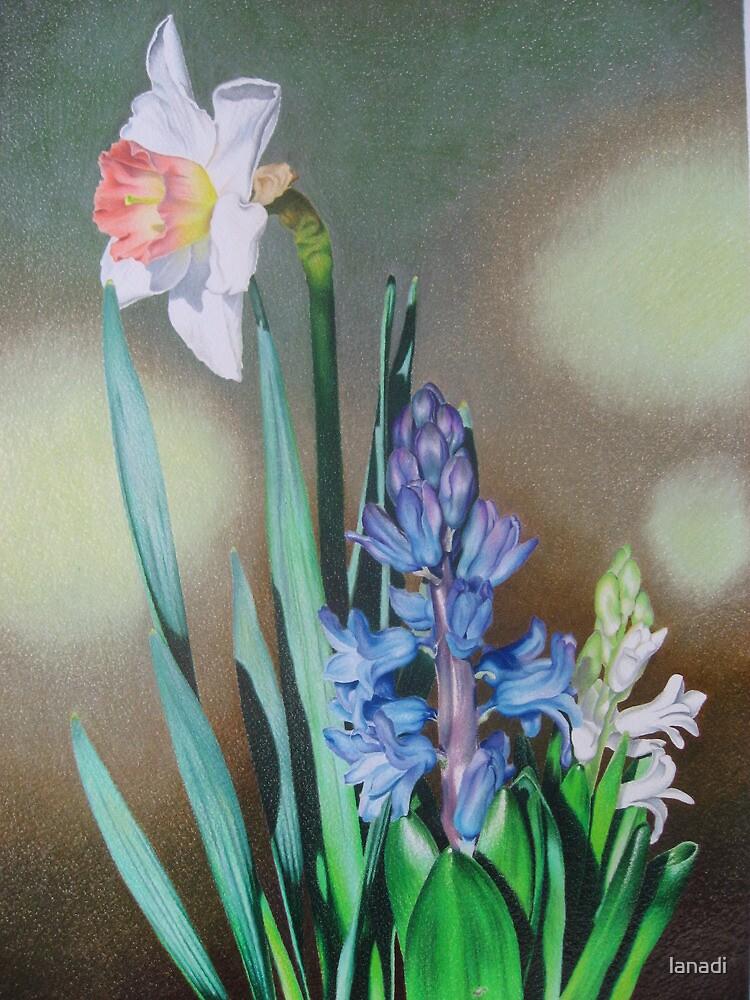 Narcissus and hyacinth by lanadi