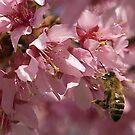 Busy Bee in my Apple Tree by Scott Englund