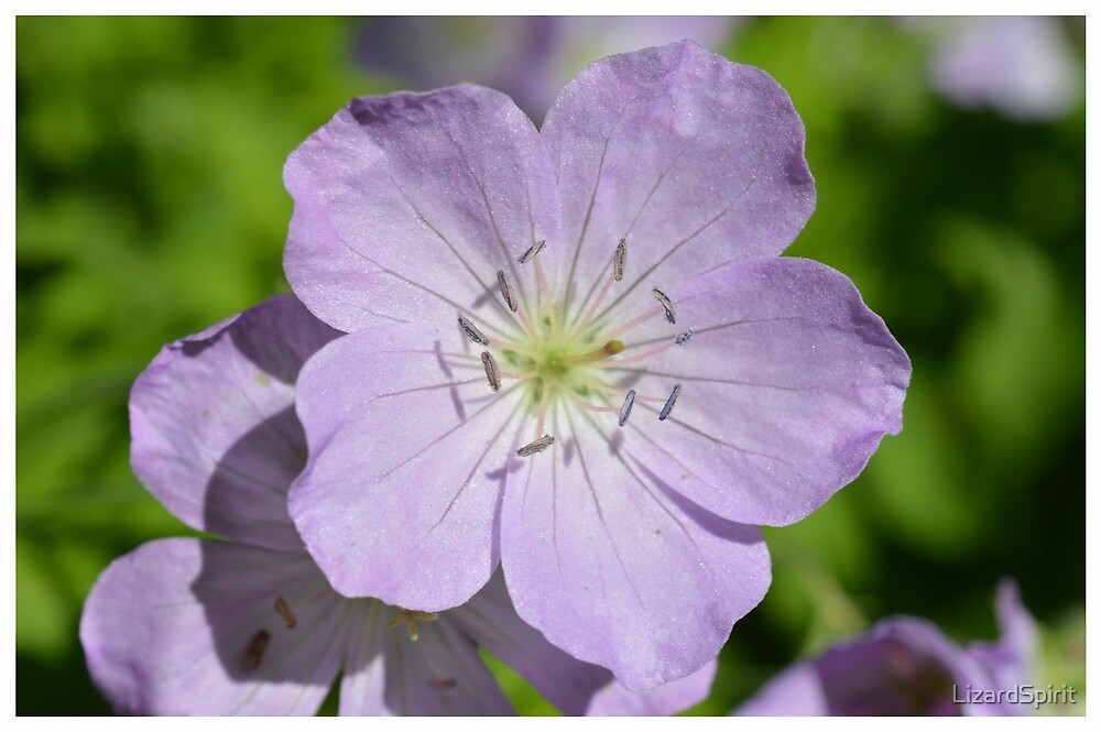 Small Purple Flower by LizardSpirit