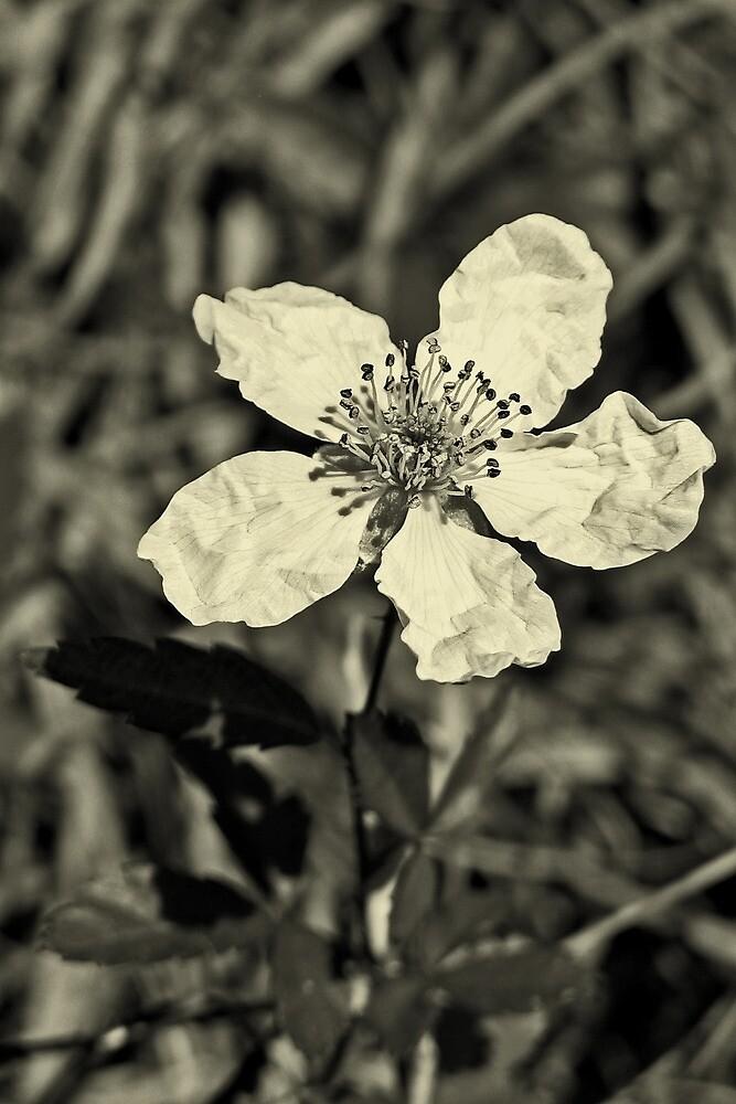 Paper Flower by DanAlford