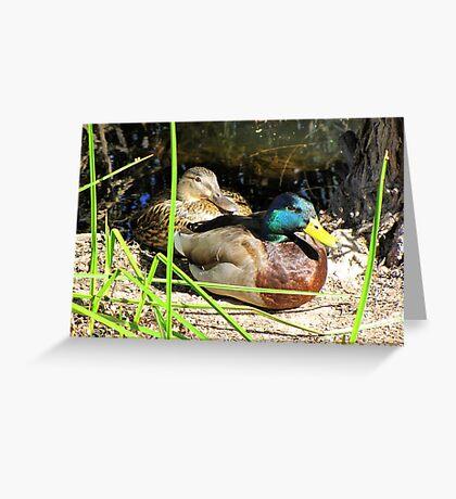 Mallard Ducks ~ Pair Greeting Card