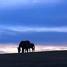 grazing as the sun sets by maragoldlady
