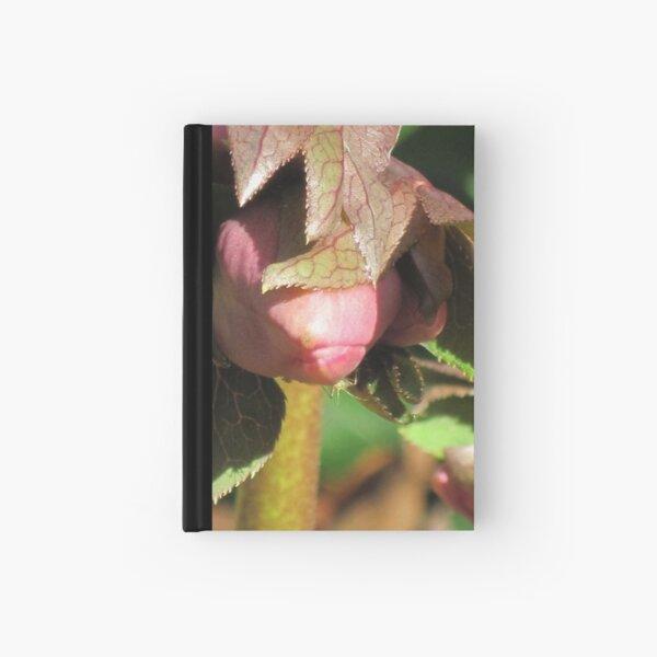 Shy:  a budding  beauty - Hellebore flower Hardcover Journal