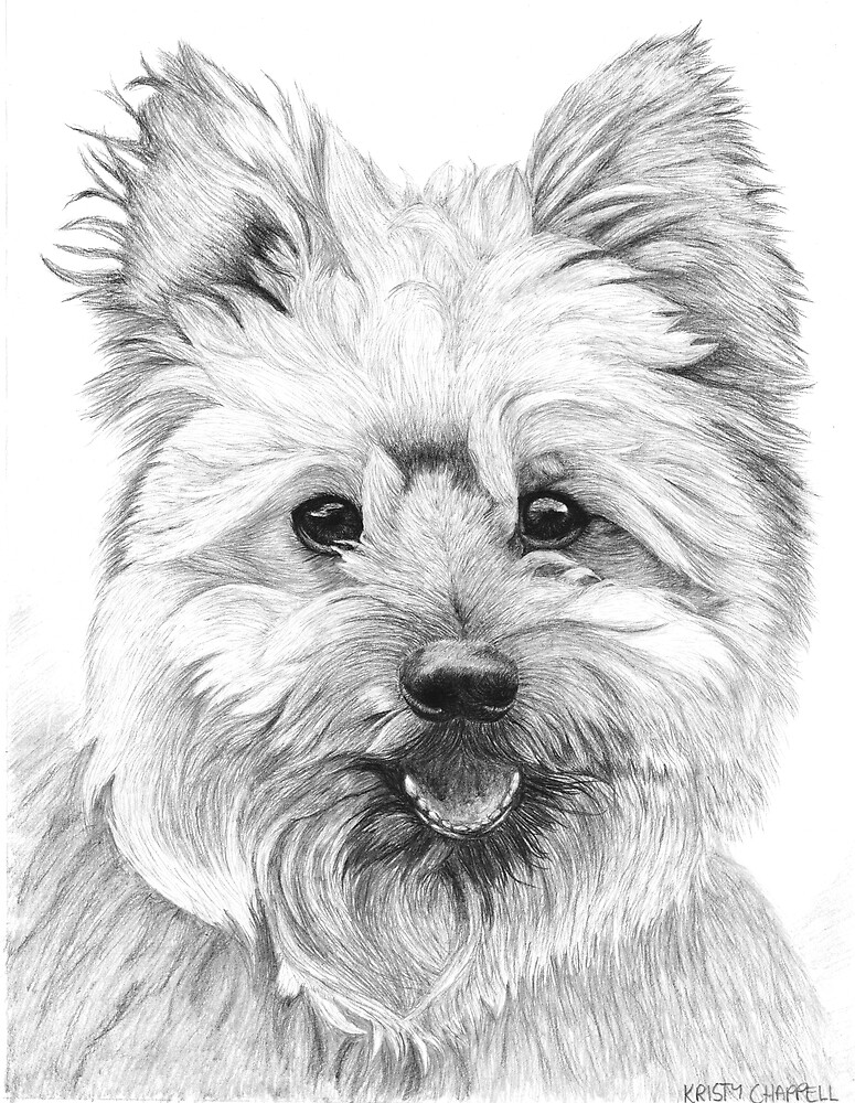 Hamish - ARF Rescue by Kristy Chappell