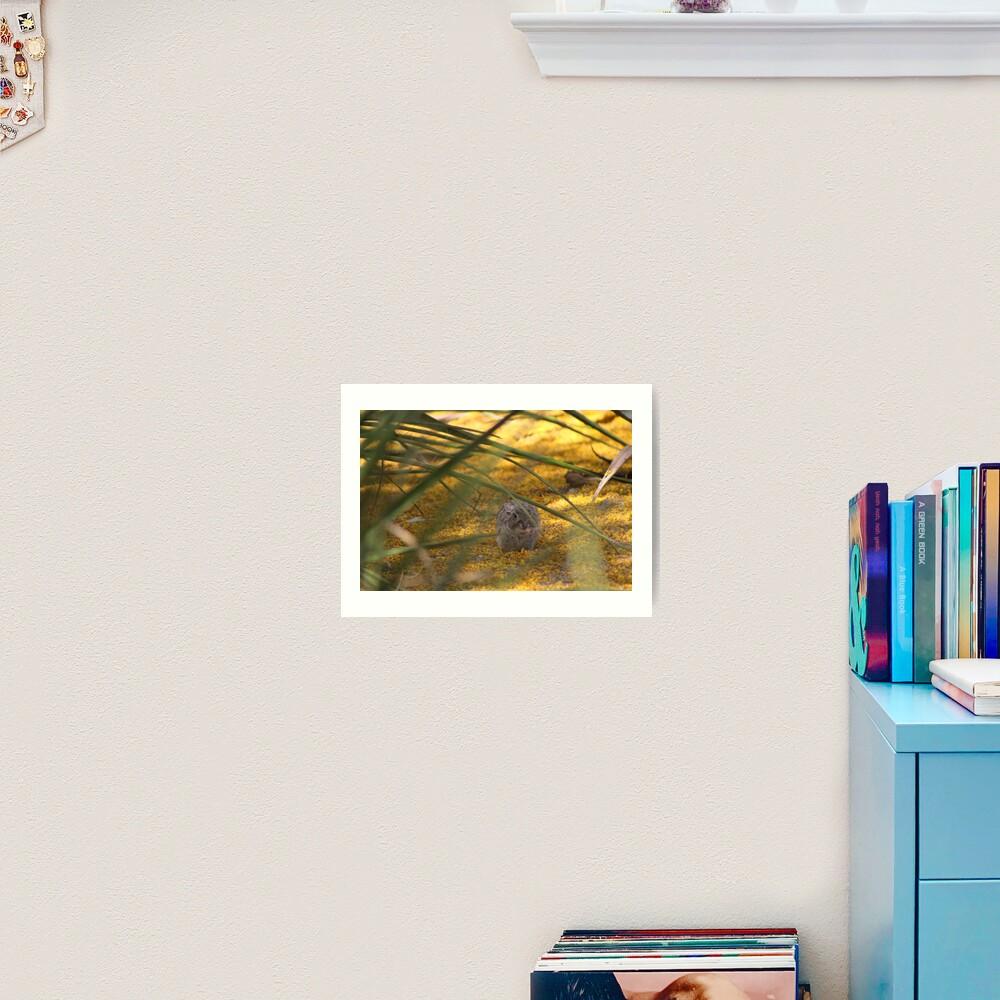 Hidden Rabbit Among Golden Palo Brea Flowers Art Print