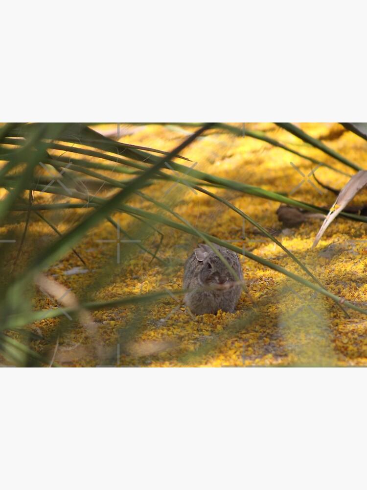 Hidden Rabbit Among Golden Palo Brea Flowers by ButterflysAttic