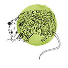 Opossum Illustration over Light Green Ink by Whitney Cole