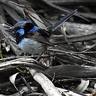 Blue feathery by Peter Krause