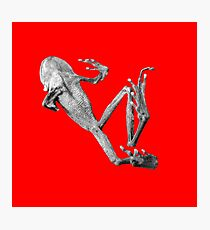 Dead Frog Photographic Print