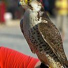Falcon #1 by MarianaEwa