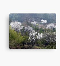 Early Spring rural China Canvas Print