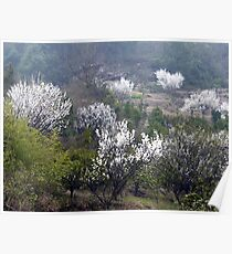 Early Spring rural China Poster