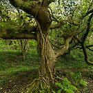 Gnarly tree by Ken Humphreys