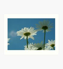 Chrysanthemum in close-up Art Print
