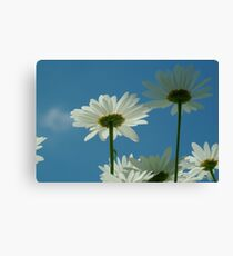 Chrysanthemum in close-up Canvas Print