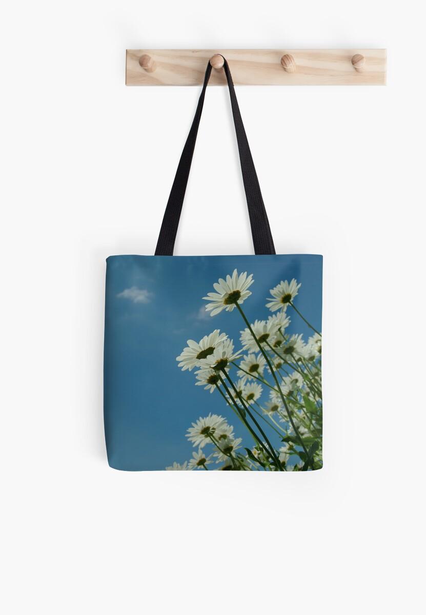 Chrysanthemum Maximum by keithphotos