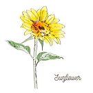 Watercolor Sunflower  by GypseaDesigns