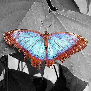 Butterfly Beauty by JohnDalkin