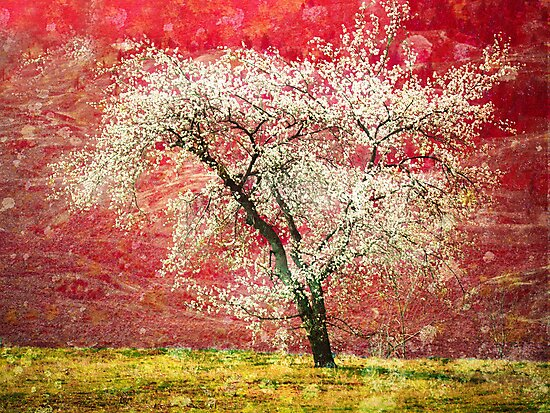 The First Blossoms by Tara  Turner