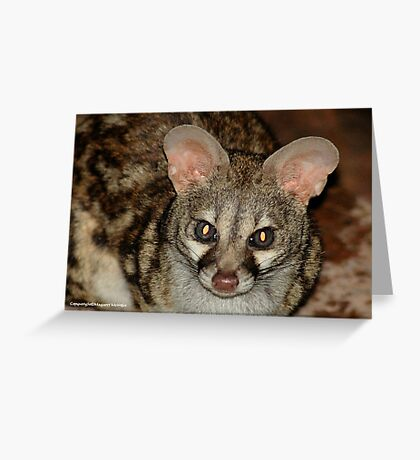 THE LARGE  SPOTTED GENET - Genetta tigrina Greeting Card