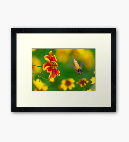 The Honey Bee and The Spring Colors Framed Print