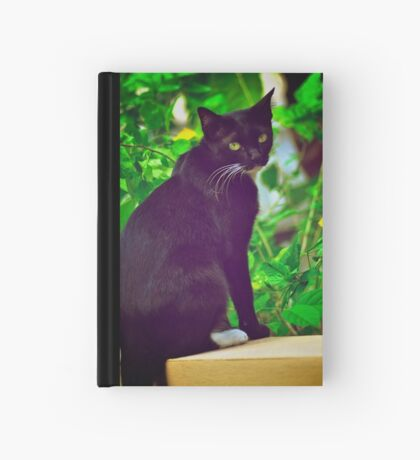 Aha, shutter click again?! mow...:Explore Featured 17Sep11, Got 2 Featured Works Hardcover Journal