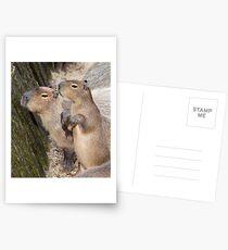 Cute Capys Postcards