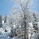 Sunshine Tree by NancyC
