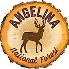 Angelina National Forest by ginkgotees