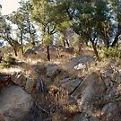 Robinson Rocks Outside of Julian by Randy Sprout