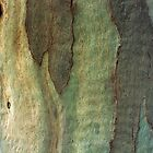 Eucalyptus Tree Bark 6 by Anna Lemos