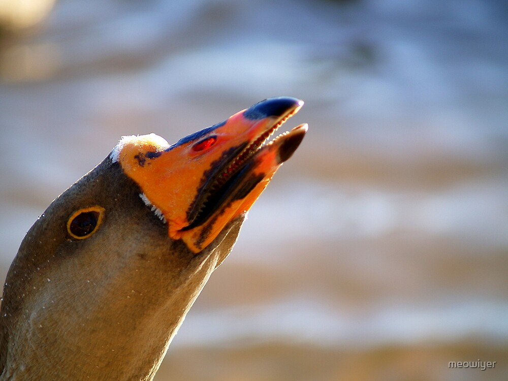Geese. Weapons of Mass Destruction? by meowiyer