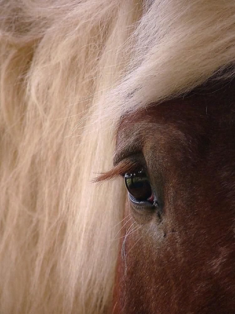 Blonde by Barbara Morrison