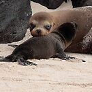 Galapagos Islands: Baby and Mother Sea Lion by tpfmiller