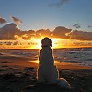 Golden Retriever Ditte and sunsets by Trine