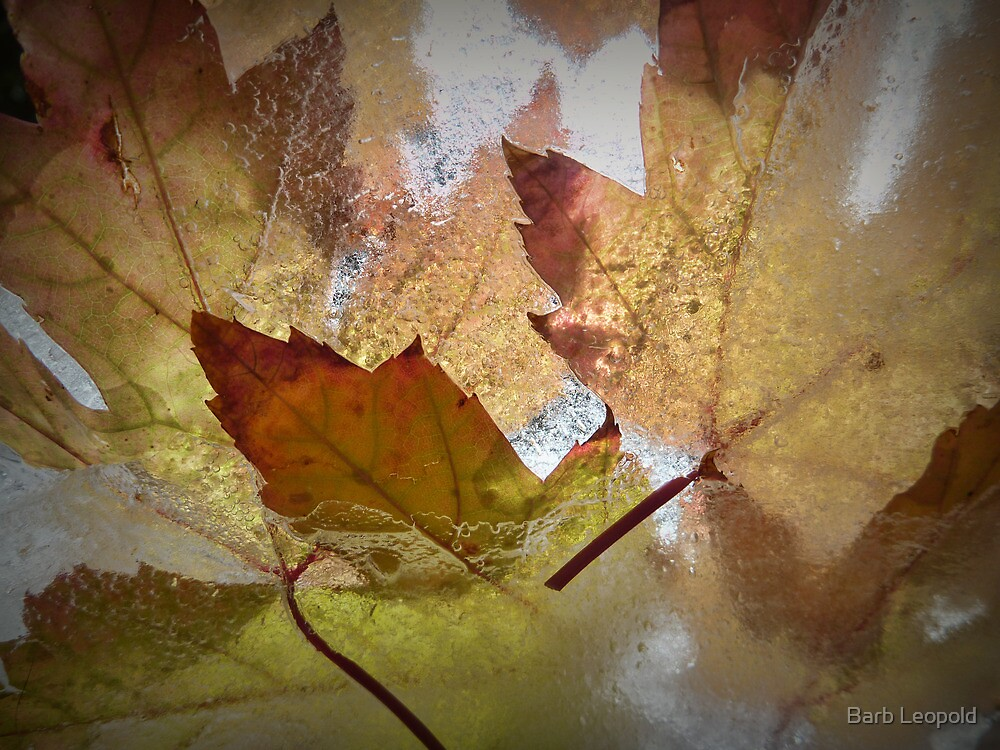 Autumn Colours, Frozen by Barb Leopold