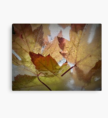 Autumn Colours, Frozen Canvas Print