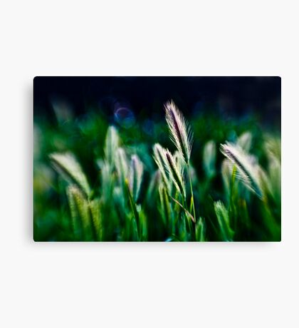 out of blur wheat Canvas Print
